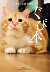猫写真集_07