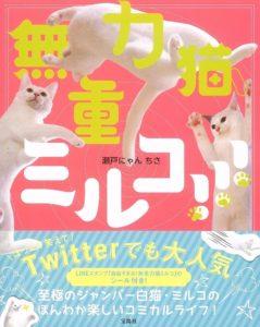 猫写真集_08