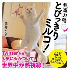 猫写真集_09