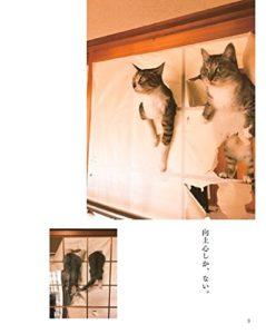 猫写真集_11