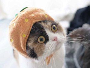 猫写真集_13