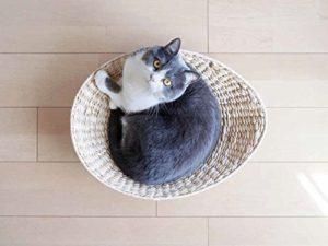猫写真集_14