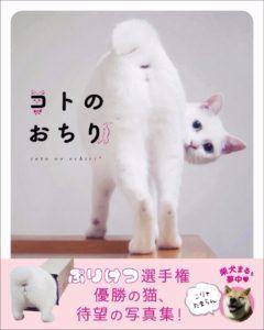 猫写真集_15