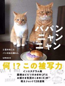 猫写真集_16