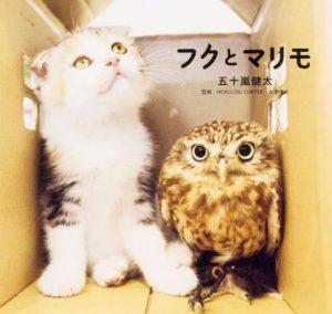 猫写真集_17