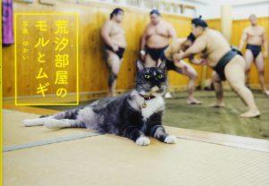 猫写真集_18