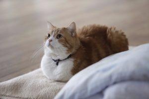 猫写真集_20