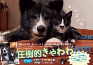 猫写真集_24