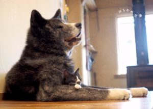 猫写真集_25