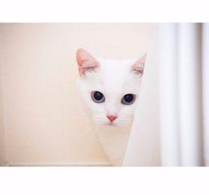 猫写真集_28